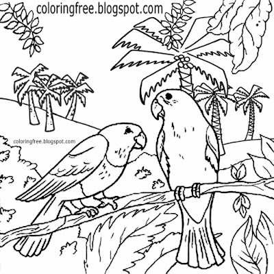 Realistic Australian birds drawing animal wildlife forest colouring in page safari printables parrot