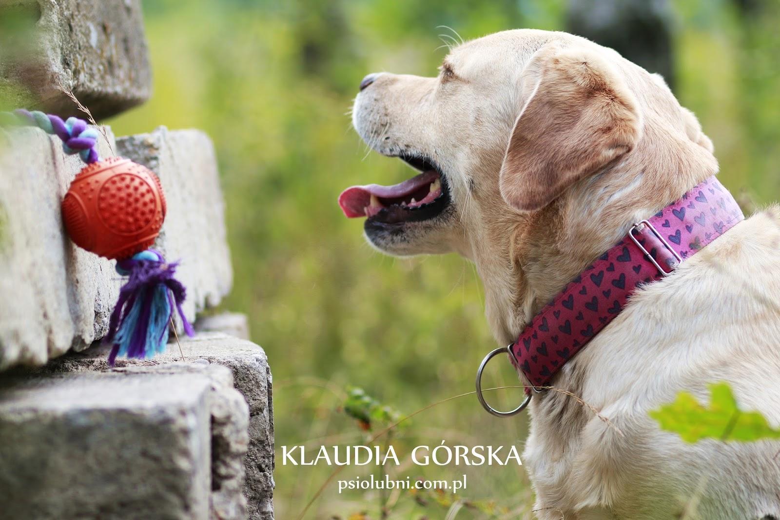 Jouet Dental Ball corde, zolux, naszezoo, zabawka dla psa, szarpak dla psa, piłka dla psa, pies, rasy psów, labrador retriever, labrador biszkoptowy, zkwp, psiolubni,