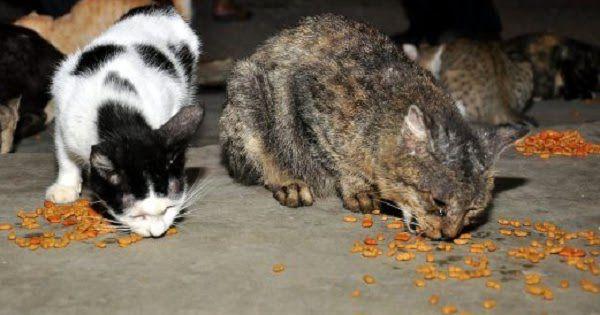 Kisah Nyata: 'Berkat Menyelamatkan Kucing, Saya Selalu Dimurahkan Rezeki'