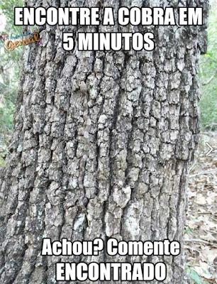 Há uma cobra nesta imagem. Você é capaz de encontrá-la?
