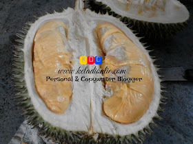 Mengidam Durian Musang King