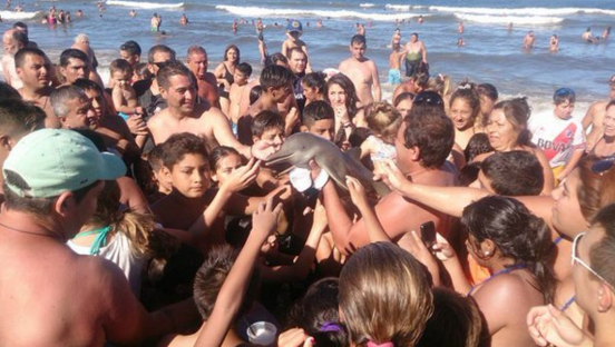 Baby Dolphin Dies After Being Passed Around for Selfies