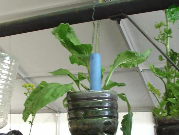 Huertos y jardines verticales caseros con botellas pvc y - Huerto vertical casero ...