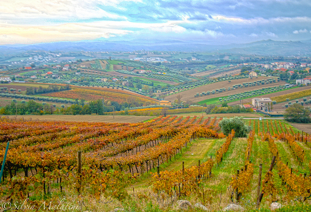 Colline Teramane DOCG wines of Abruzzo