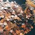 वित्त के क्षेत्र में अंतर्राष्ट्रीय वित्त की आवश्यकता क्यों है?