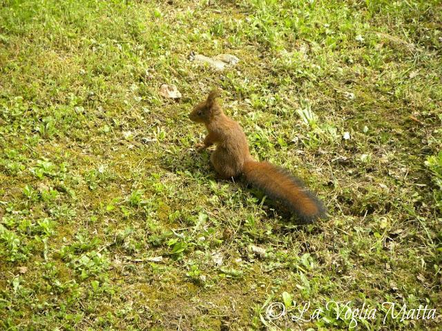 scoiattolo al Mulino Bianco di Chiusdino