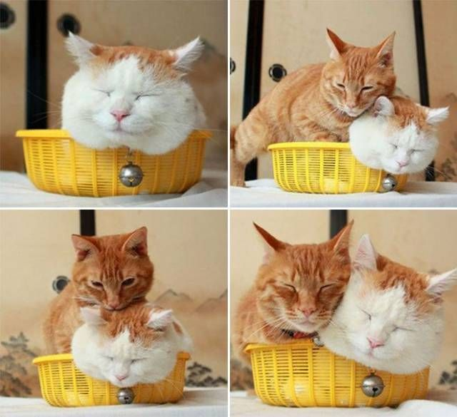 Funny cats - part 275, best cat images, funny cat image