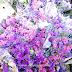 Idea Dekorasi rumah dengan bunga-bunga kering ( dry flowers )