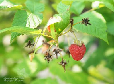 ягоды малины