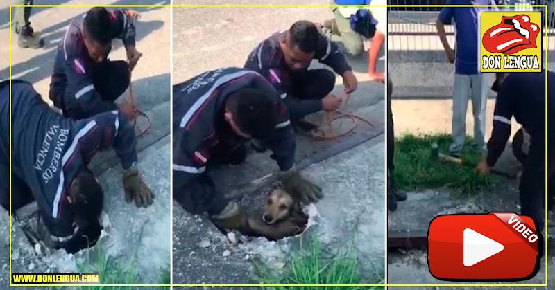 Bomberos de Valencia le salvaron la vida a un perrito de la calle - Por Fin algo bueno!