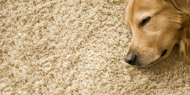 Dog sleeping on carpet