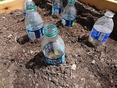 DIY Raised Garden Bed - gardening tips and tricks - plastic bottles