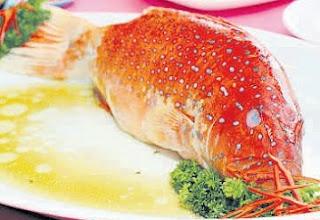 cara memasak ikan kerapu asam manis,cara masak ikan kerapu,cara memasak ikan kerapu steam,cara memasak ikan kerapu yang enak,resep olahan ikan kerapu,cara masak ikan kerapu goreng,