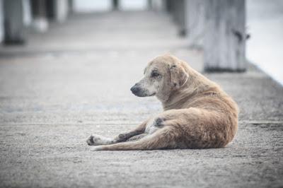 ¿Qué hacer si vemos a un perro abandonado en la calle?