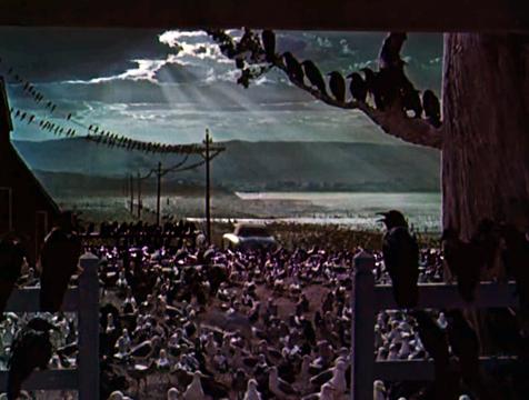 Fotograma final de la película Los pájaros - Cine de Escritor