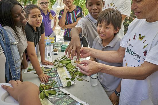 Wild Vizcaya Takes Over Vizcaya Museum Gardens