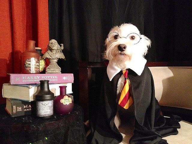 perro disfraz Harry Potter