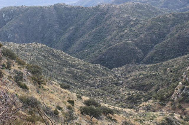 Guided%2BCoues%2BDeer%2BHunts%2Bin%2BSonora%2BMexico%2Bwith%2BJay%2BScott%2Band%2BDarr%2BColburn%2BDIY%2Band%2BFully%2BOutfitted%2B16.JPG