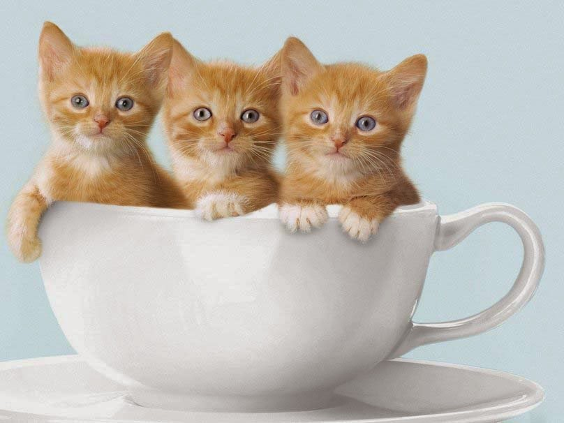 tiga anak kucing kecil