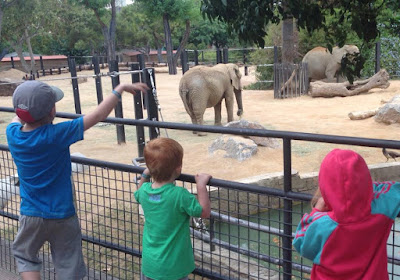 The best places to visit in Catalonia : Elephants at Barcelona Zoo