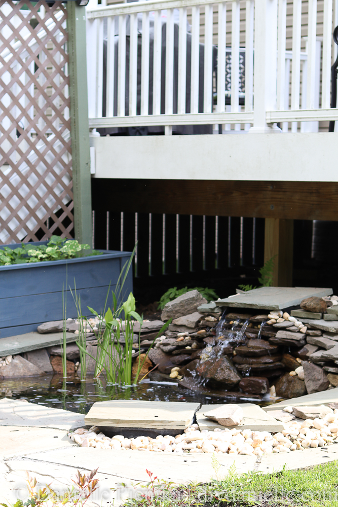 Backyard garden pond and patio setup with fish and plants choices, UV light for water clarity, and more.