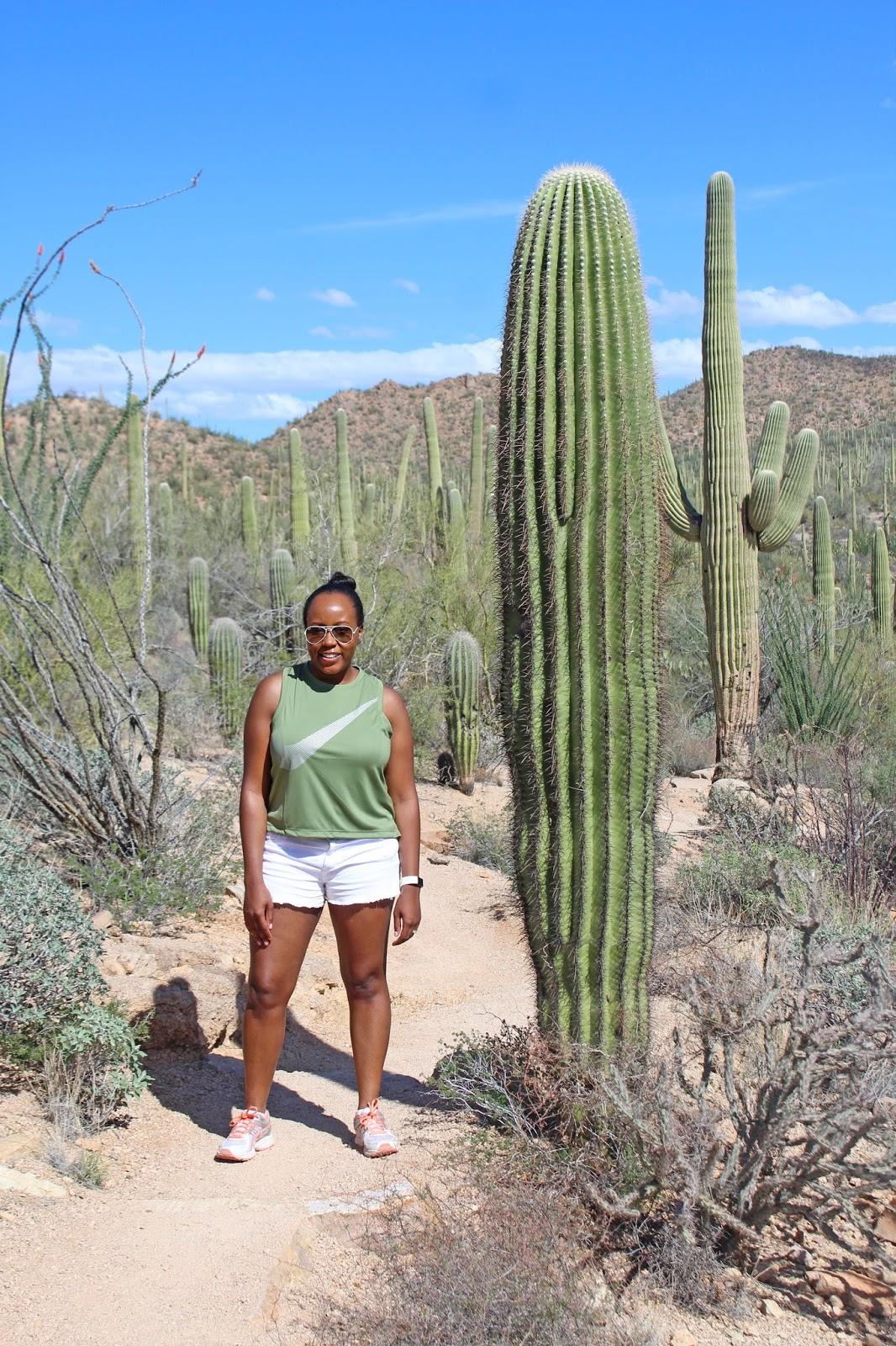 saguaro national park day trip 13