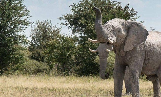 """Picture of elephant with """"two trunks"""" sends the Internet into confusion"""