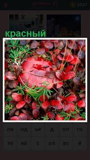 в лесу на поляне растет красный гриб с листьями вокруг