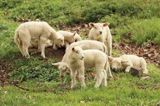 Anak hewan atau yang dalam bahasa Inggris disebut dengan young animal merupakan anak hewa 45 Nama Anak Hewan (Name for Animal Young) dalam Bahasa Inggris dan Penjelasannya