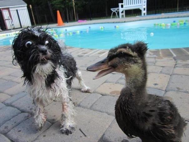 Смешная реакция собак когда они чего-то испугались