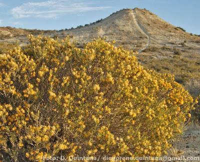 flora de la estepa Quilembay
