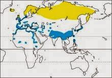 eurasian wigeon Mareca penelope map