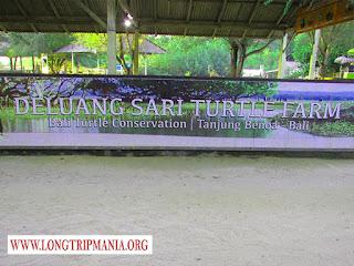 Tempat Wisata Penangkaran Penyu Deluang Sari Bali