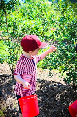 Picking blueberries at Thunderbird Farm Broken Arrow, OK