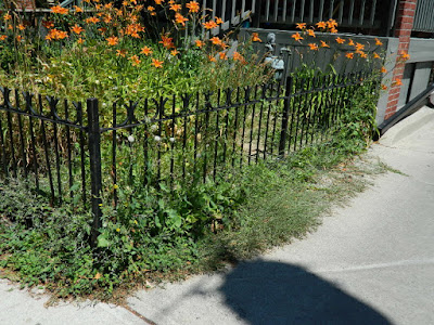 Leslieville Toronto Front Garden Summer Cleanup Before by Paul Jung Gardening Services--a Toronto Gardening Company