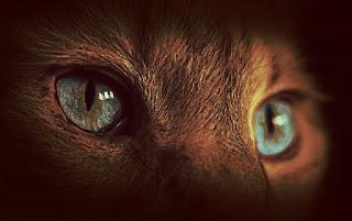 Das Foto zeigt die Augen eines Tieres.