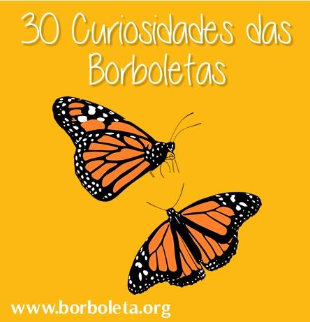 30 Curiosidades sobre as Borboletas e Mariposas
