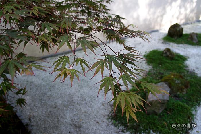 jardin japonais musica nigella, jardin zen et érable
