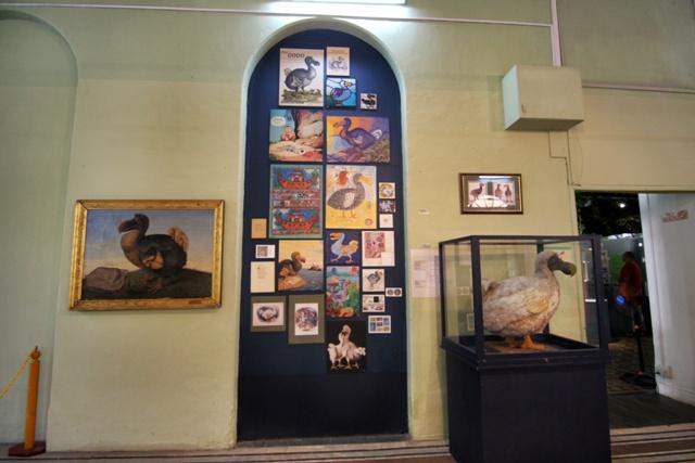 Pajaro Dodo en el Museo de Historia Natural de Mauricio