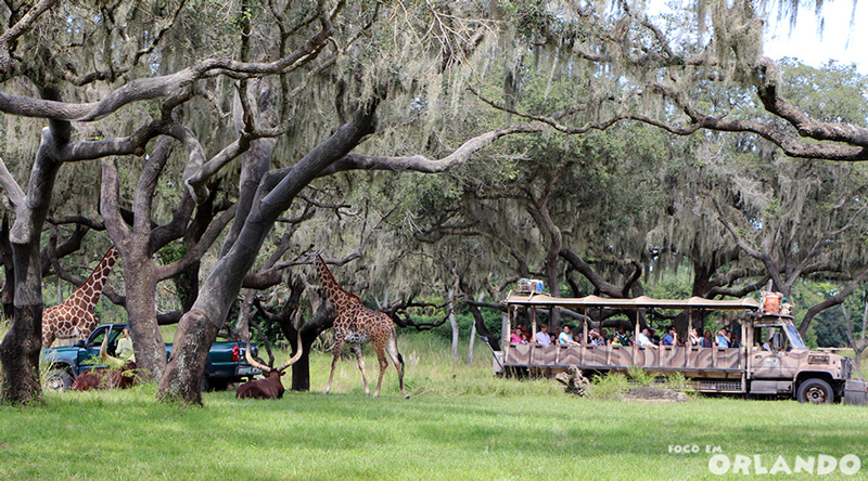 Kilimanjaro Safaris, DIsney's Animal Kingdom, Orlando