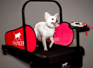 Dog Treadmill A Great Way TO Physical Fitness