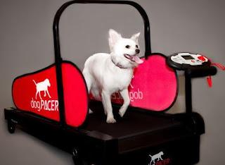 Dog Treadmill Una gran manera de la aptitud física