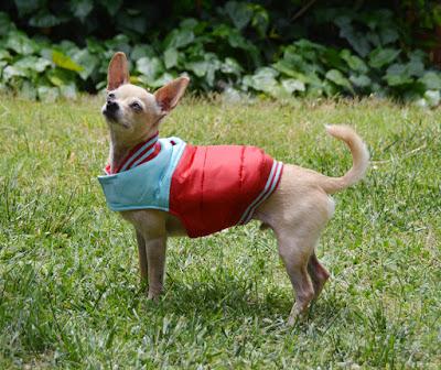 puffer dog coat