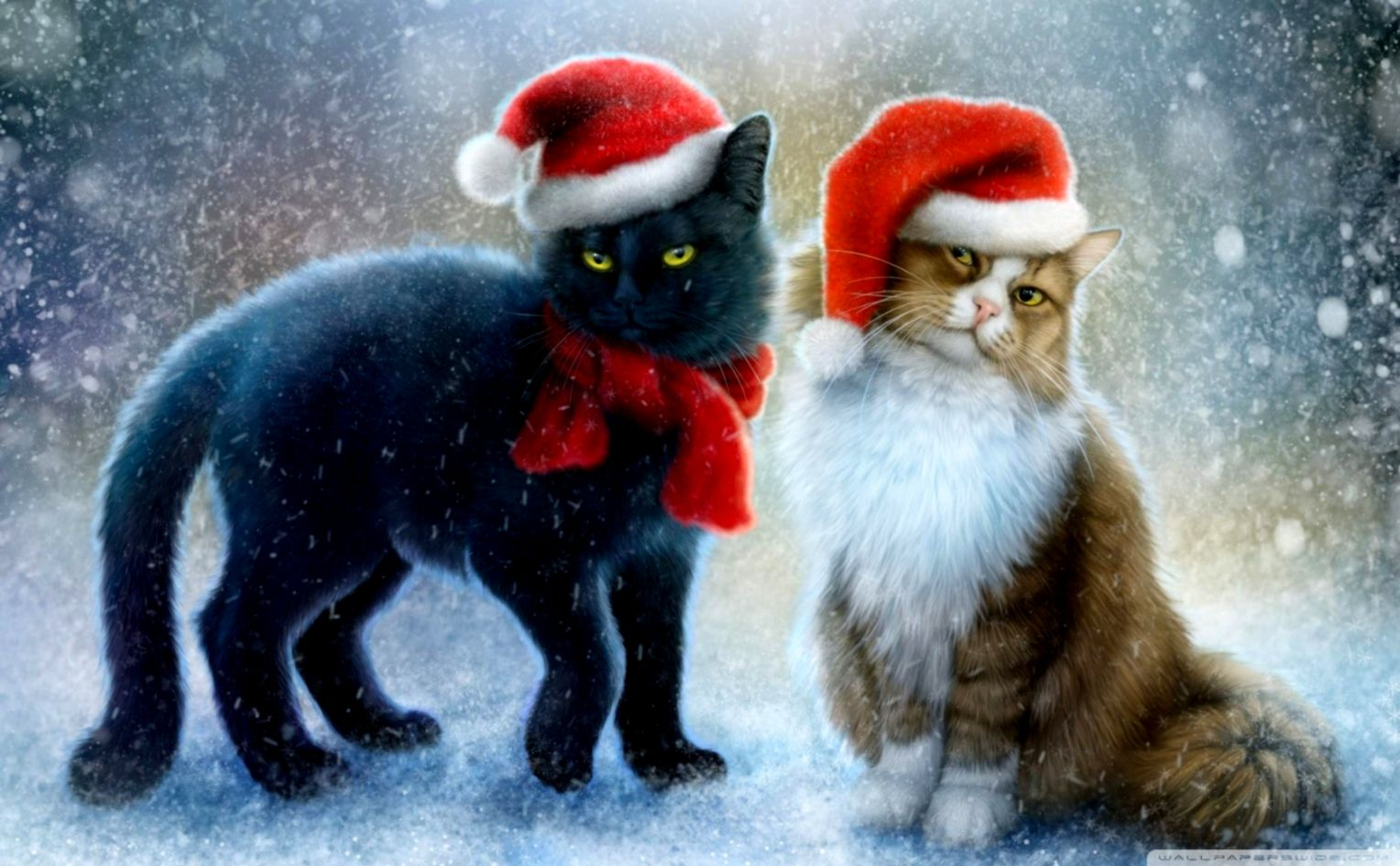 Christmas Cat Wallpaper Pixell Wallpapers