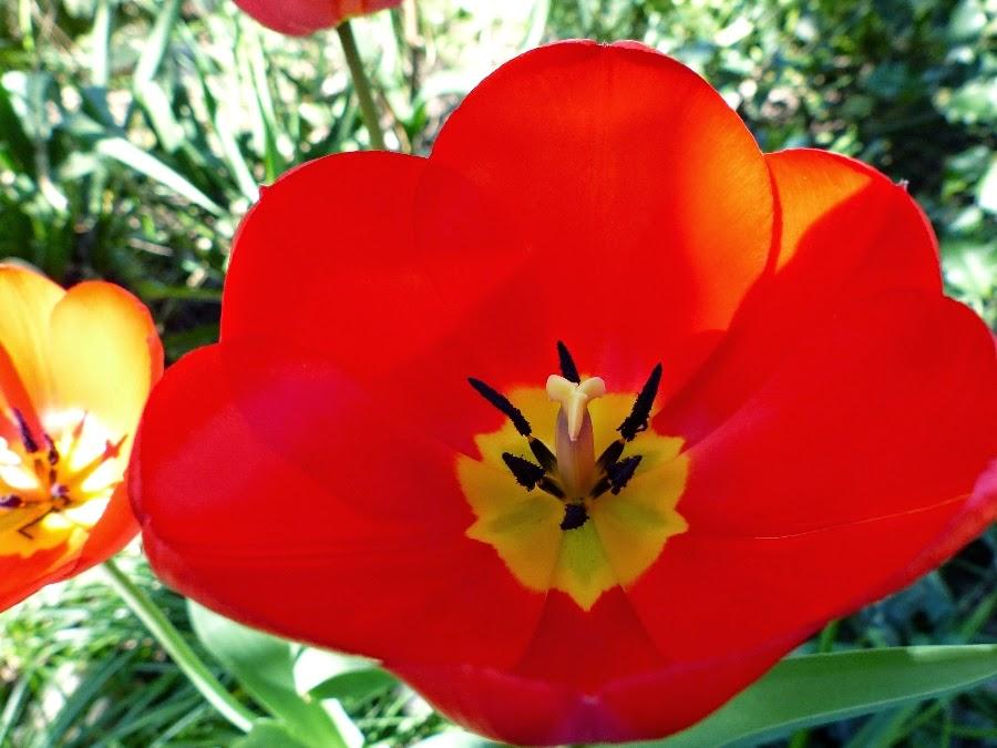 Blog Non Identifie Le Jardin Le Soleil Des Fleurs Des Couleurs