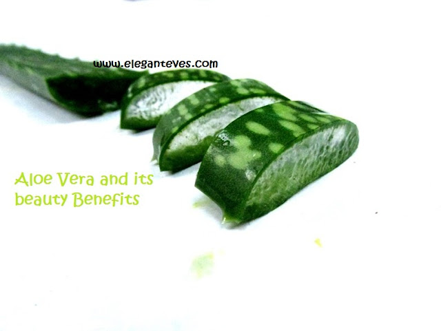 Aloe Vera: The Plant of Immortality and its Beauty Usages!