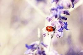 ladybug-676448__180.jpg