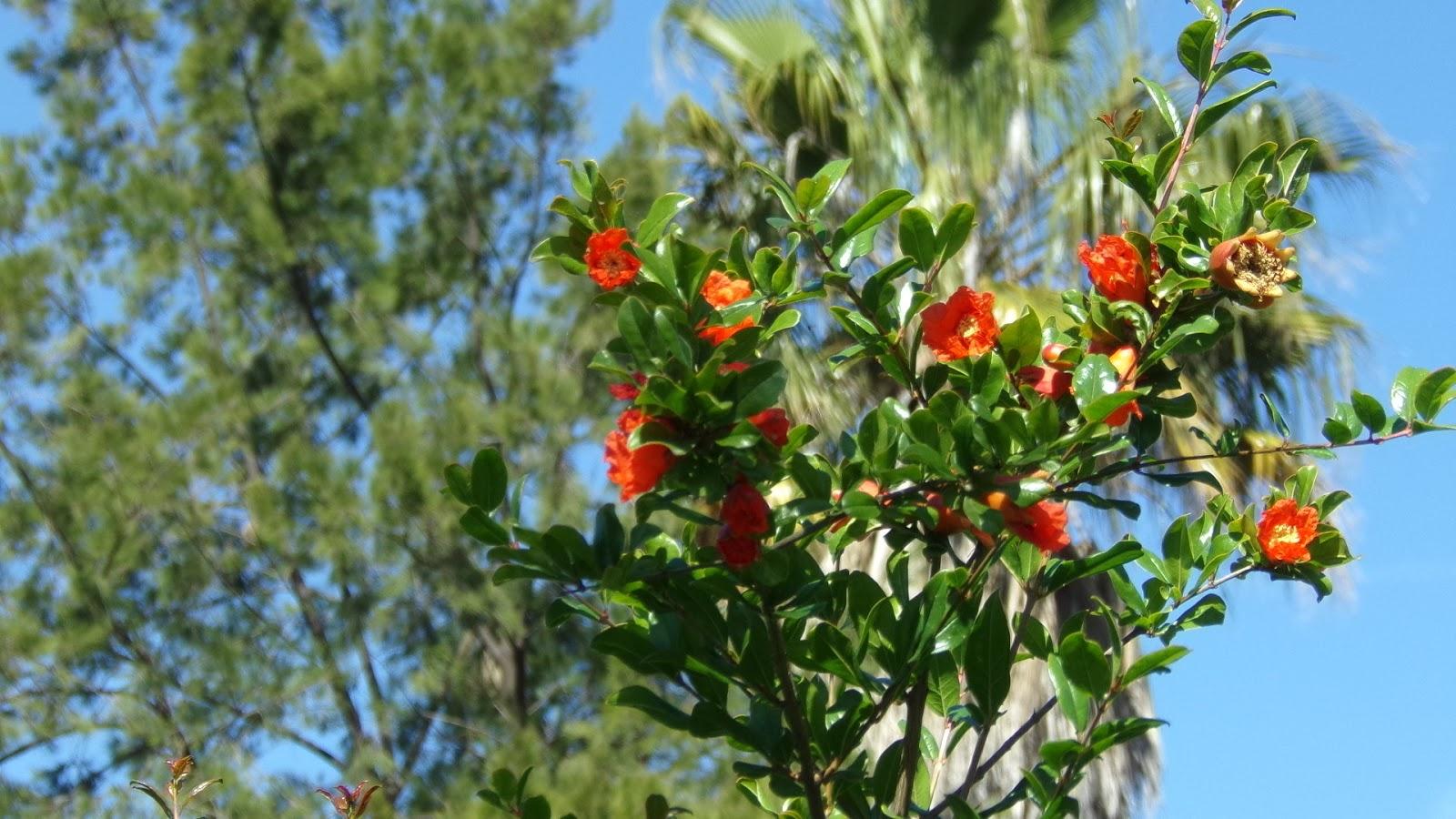 39 blog sur le portugal to discover portugal 39 for Portent ses fruits