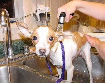Tips How to Bathe and wash Dog Properly