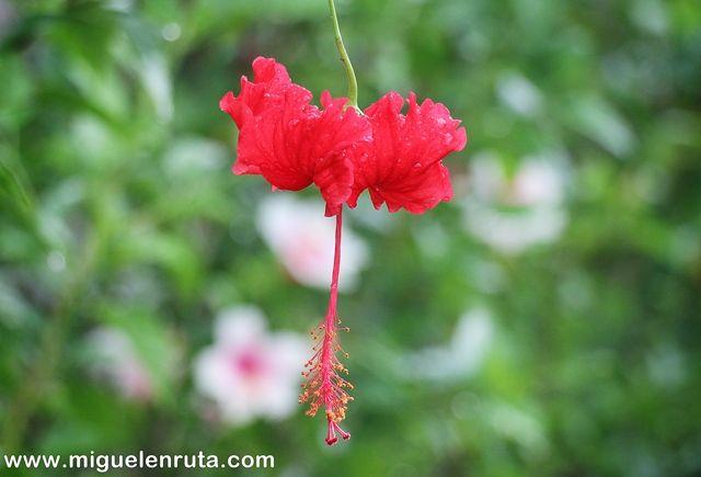 Flores-Bali-Indonesia